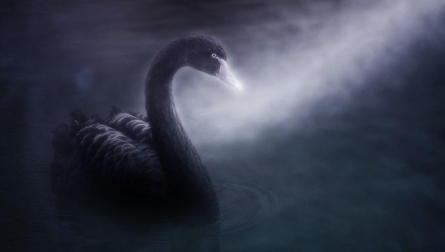 swan-4107442_640